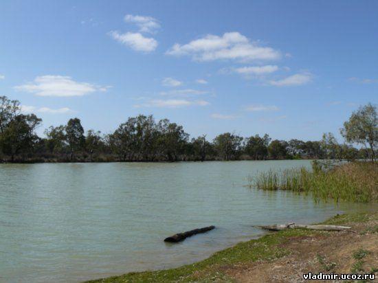 Австралии органический мир австралии